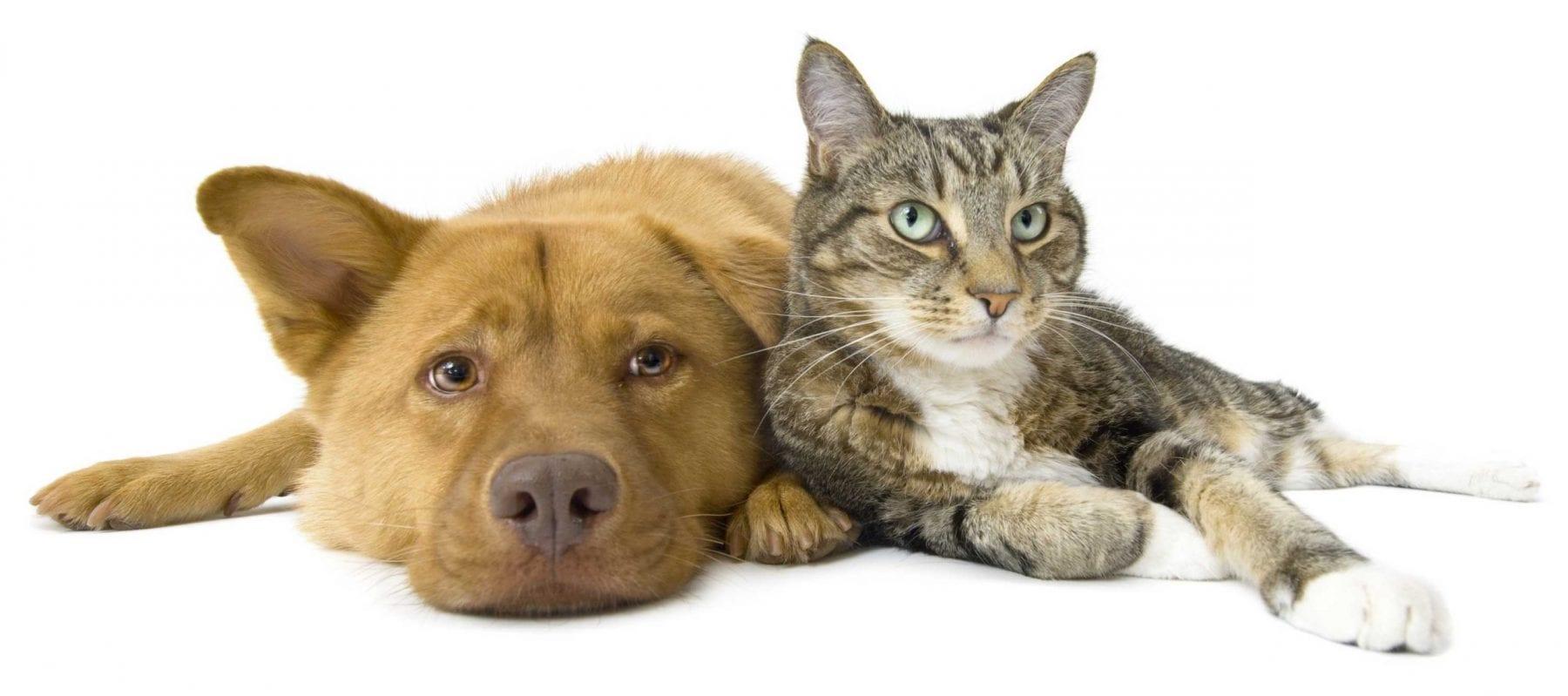 household pets